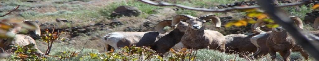 Oregon JD Rams 03
