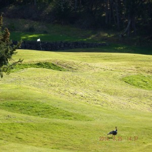 Turkeys Golf Course flag INT