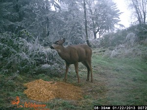 This was in January and in this case it was about seeing what the carryover was with the Blacktail Bucks in the area.