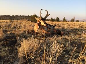 Kens Antelope 2014 Int 01